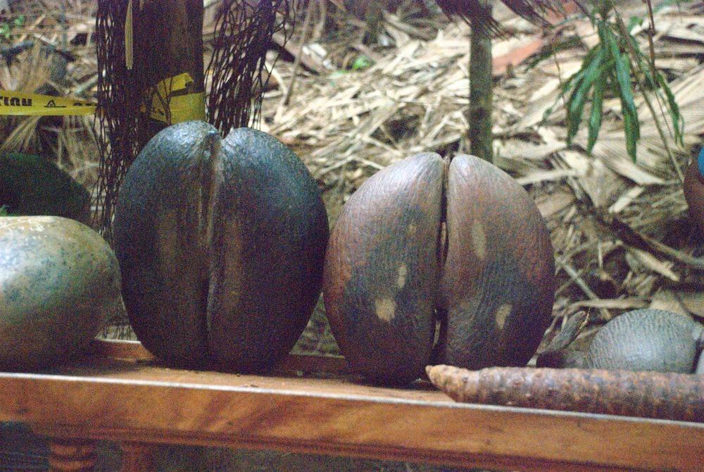 Kaksikotinen Kasvi